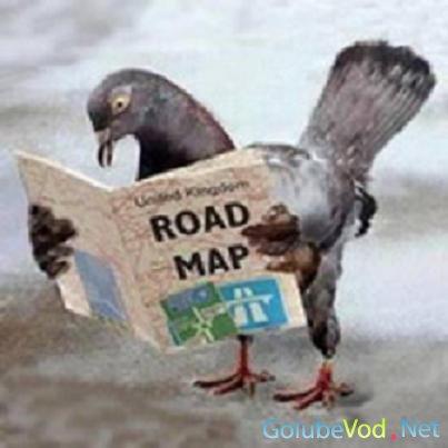 Память голубей