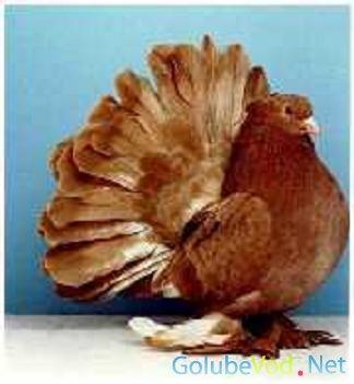 Аккерманские голуби