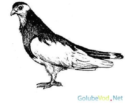 Ржевские голуби