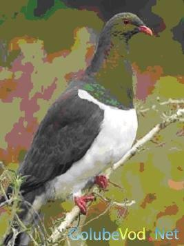 Туристы могут сесть в тюрьму за убийство голубей