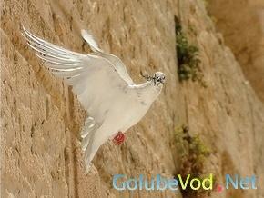 В Иране пойманы голуби-шпионы