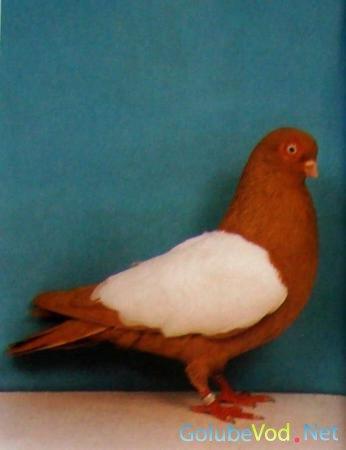 Венские голуби