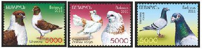 Белоруссия. Голуби