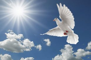 Породы голубей: фотографии и названия