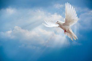 Птица мира голубь