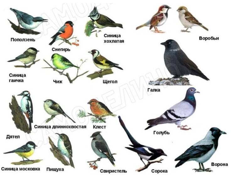 Кормушки для птиц своими руками: как сделать по-настоящему доброе дело, не навредив птицам
