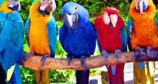 Попугай ара: фото, цена, описание, содержание, отзывы