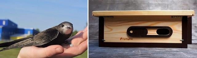 Скворечник для птиц своими руками: схемы и пошаговые фото инструкции