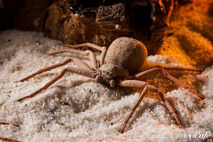 ТОП-16 самых опасных пауков в мире