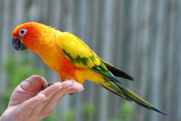 Виды домашних попугаев с описанием, названиями и фото